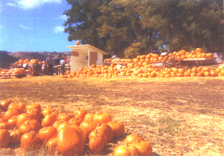 Early Roadside Stand at Jack Creek Farms